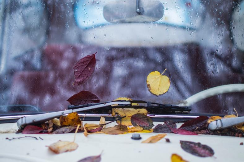 liście jesienne na przedniej szybie samochodu